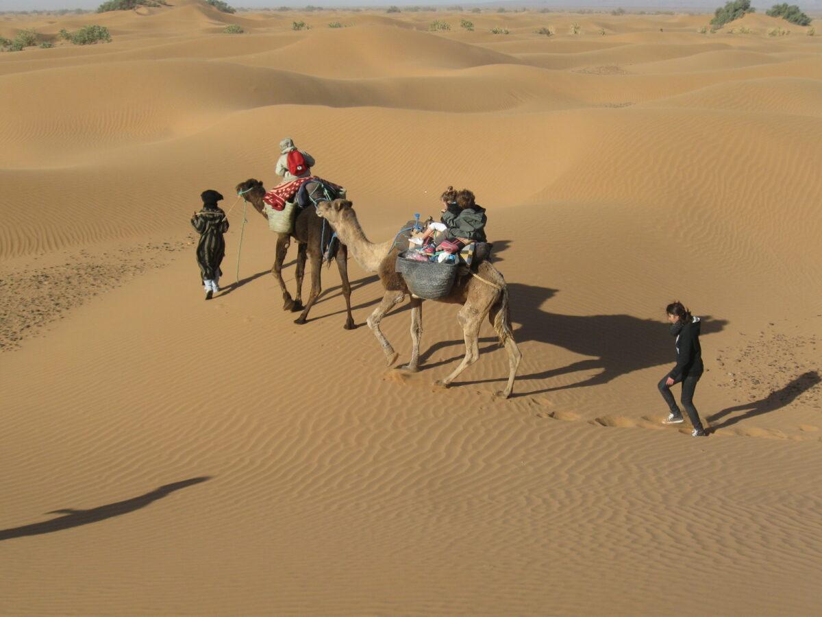 camel_tour_morocco_sahara