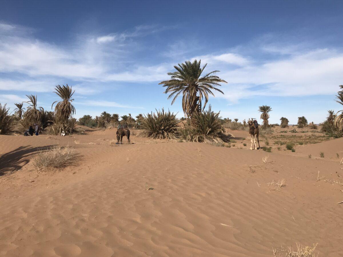 groen in de sahara