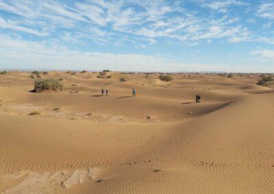Reset in de sahara